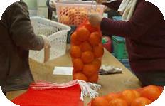 柑橘類出荷作業